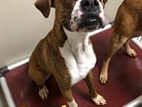 My story Bailey is a 1-2 yr old Boxer. Bailey is such a