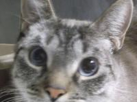 Baked Beans is a two year old neutered male. He is UTD