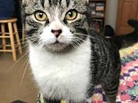 Balazar's story ~~Balazar is a 6-7-month-old neutered