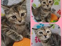 Bali's story Our adoption fee is 80.00 which covers
