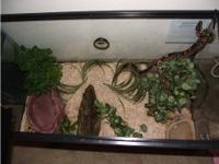 Hi, I'm Looking for a good home for my Ball Python for