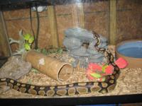 4- Ball Pythons (normals) need new homes .Must have