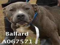 BALLARD's story Male, found on Ballard Rd in Grand Bay,
