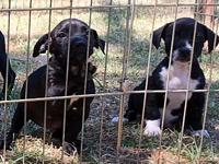 Balli & Bambi's story These 2 sisters are sweet and