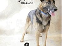 Baloo's story Baloo is 5 years old and needs a