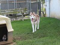 Balto's story Balto needs a home! Balto is a two year