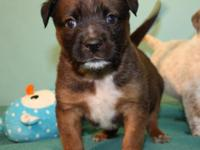 Bam Bam is a sweet puppy who was a bottle baby with us