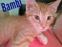 "Bambi's story CatRangers, ""Because Cat Special Forces"