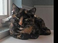 Bambi's story Bambi came to us as a malnourished stray.