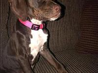 My story This hound mix puppy is sweet as pie. She will