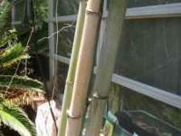 I have bamboo poles for sale. Average pole is 6 inches