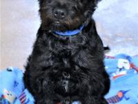 Primary Color: Black Weight: 13.7 Age: 0yrs 4mths 0wks