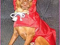 My story This is Banana! She is modeling a rain coat