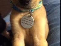 Bananas Foster is a ten week old pup looking for a