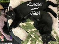 Banchee and Blaze's story These 2 boys were born under