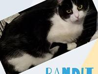Bandit's story Bandit is still a kitten as he is ten