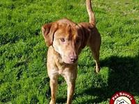 Bandit - Fee $125's story I'm a 1 year old Lab/Hound