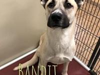 My story Bandit is a 2-3 yr old Husky mix. What a funny