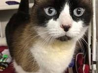 Bandy's story Bandy( A159133) is a 4 year old kitty who