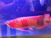 We are exporter and breeder of tropical Aquarium live