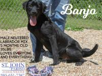 Banjo is a 5-6 month old Lab mix that was adopted from
