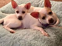 Barbara & Buttercup - Puppies's story These dogs are