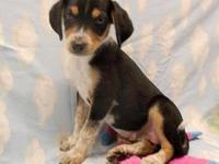 Barbie's story 18-D08-017 Barbie Breed: English