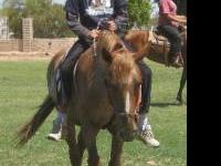 I offer horse riding lessons to children of any age on