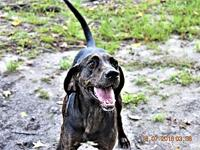 Barklee's story Super loving dog, Great with everyone