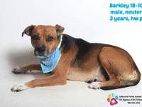 Barkley has a great personality and is loads of fun...