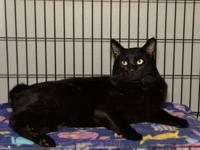 Barkley's story 19CH0052 I was rescued as a stray from