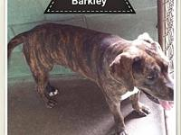Barkley's story Barkley came in March of 2016 at about