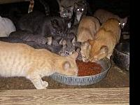 BARN CATS's story We have tons of barn cats available