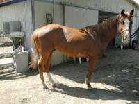 We have several great horses for sale. From Green Broke