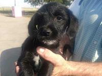 Barn Puppy Beta's story Please visit our website at