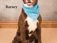 Barney is back at our shelter again. This poor guy was