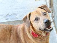 My story Hi i'm Barney, I am such a good boy!! I'm here