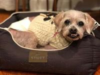 Barney's story FOSTERED IN:Chicago 60647 AGE: 14 Years