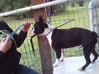 Baron's story Baron is up to date on his shots and