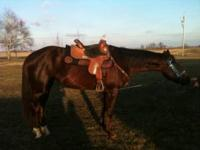 9 year old aqha mare. Runs barrels and poles. Great
