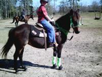 """SPY"" is a 12 yo dartmoore pony mare....she is rite at"