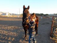 """Rocky"" is a 10 yr old brown gelding out of Tari Pistol"