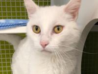 Barry (White) is a super friendly cat. He's laid back,