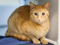 Barry is a shy sweet guy looking for a quiet home. He