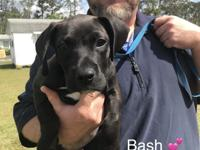 Hi! I'm Bash! I was an ower surrender. I'm about 11