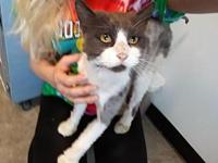 Bashful's story Bashful is a sweet guy who's in need of