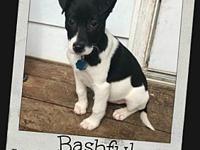 BASHFUL's story **More info coming soon on Bashful!**