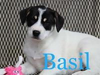 Basil's story New puppies have arrived at EAPL!