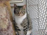~~Very handsome kitten; loves to explore and play;