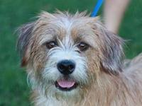 Basil - MEET ME @ PETCO 8/18's story This dog is in